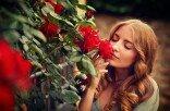 Разводите розы с помощью картофеля